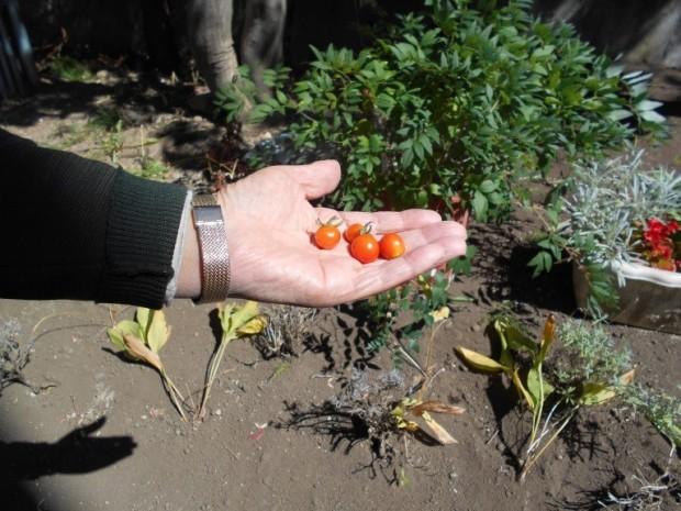 太田様の花壇1